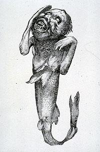 Banums angebliche Fidschi-Meerjungfrau