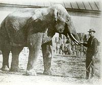 Zirkus-Elefant mit Trainer im neunzehnten Jahrhundert